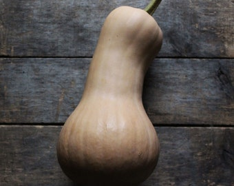 Waltham Butternut Squash, heirloom organic vegetable seeds, from our farm, eco friendly gardening, organic vegetable garden, gardener