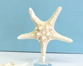 """Large Knobby Starfish Mounted on Lucite - 8.5"""" wide x 8.75"""" high -  beach decor/nautical decor"""
