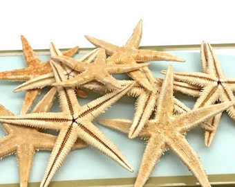 "Starfish - Flat Natural Starfish - Set of 10 - 2""-3"" Beach Decor star fish coastal beach wedding"