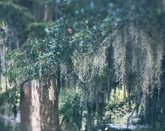 """New Orleans City Park Oak Tree Print. Louisiana Photograph """"Spanish Moss"""". Louisiana Home Decor, Wall Art"""