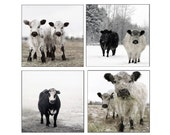 Set Black and White Photography Set of White and Black Cows in the Snow Set of Four Photographs