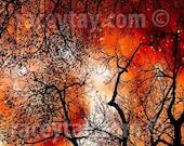 Fine Art Photography, Surreal Orange Black Wall Art- Spooky Black Orange Nature Photography