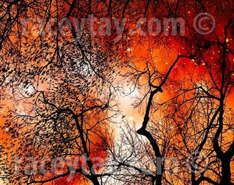 Fine Art Photography, Orange, Black, Spooky Art, Spooky, Tree Branches, Fall, Nature Photography