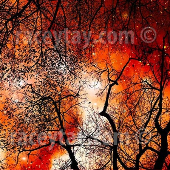 Fine Art Photography, Orange, Black, Spooky, Tree Branches, Halloween, Fall, Nature Photography