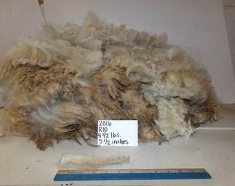 White Half Black Merino Wool R10 2016
