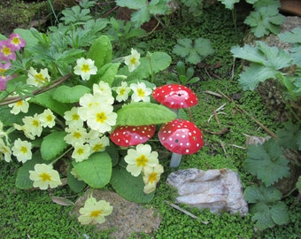 Garden Toadstools.