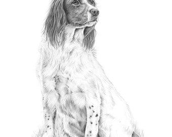 Spaniel Study - Limited Edition Giclee Print