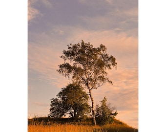 Fine Art Color Photography of Tree and Evening Sky On Suomenlinna Island in Finland
