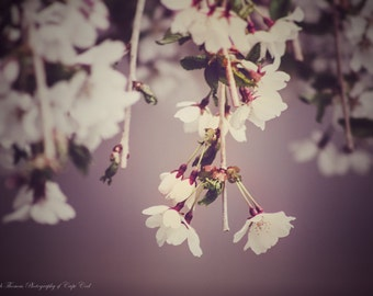 WEEPING CHERRY FLOWER Fine Art Photography, Shabby Chic Decor, Nature Photo, Scenic, Spring Art, Rustic,
