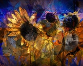 Abstract Graphic Sunflowers Blooming in a Field near Rockford Michigan No.00483 A Fine Art Yellow Flower Modern Photographic Digital Image