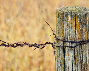 Fence Post - 5x7 Fine Art Photograph