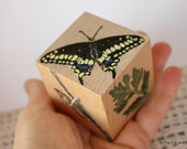 The Black Swallowtail Butterfly Lifecycle Block -   handpainted wood block