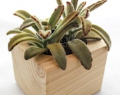 Handmade Cedar Succulent Planter by Midnight Blossom - Rustic wooden planter w/ beautiful succulent plant included