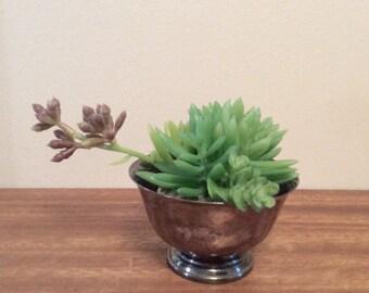 Vintage revere pewter mini bowl with succulents
