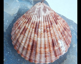 Shell Pendant Bead,63x58x2mm,7.6g