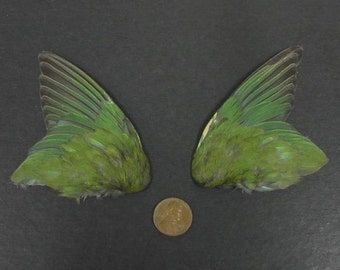 Pair of Green Fanned Wings Dried Birds Wings Feathers Art Craft Taxidermy