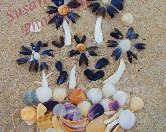 Beach Art....Flower Photography..Landscape Photography...Beach Photography..Shell Art