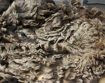 Shetland Raw Whole Fleece