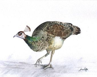 Female Peafowl Watercolor Painting
