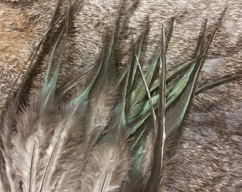 Natural Black/Bronze Rooster Saddle Feathers - Hand Selected - Lot of 100