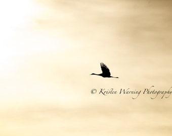 Bird Photos, Birds in Flight, Birds, Sandhill Cranes, Cranes, Pictures of Birds, Nature