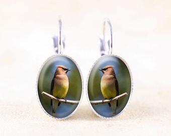Cedar Waxwing Earrings - Silver Bird Earrings, Bird Photo Jewelry, Nature Dangle Earrings, Cedar Waxwing Photo Earrings, Silver Bird Jewelry