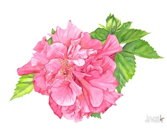 Hibiscus watercolour painting print, A3 size. H10616. Hibiscus painting. Hibiscus print. Botanical wall art. Botanical print.