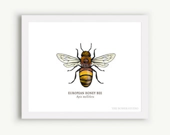 Honey Bee Print - Unmatted - 100% of Profits to Save the Bees