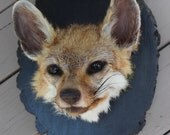 "Golden ""island"" Fox Grey Fox Head Mount Taxidermy Oddities Curio"