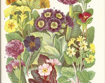The Oxford Book of Garden Flowers - SALE