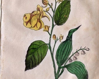 1847 Botanical Print Lily of The Valley Balsam Flower Handcolored Antique Print