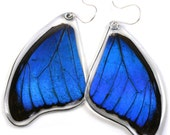 Real Blue Morpho Butterfly (Morpho Menelaus) (top/fore wings) earrings