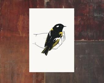 Bird In Hand Print - Stitchbird - New Zealand Bird