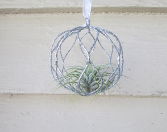 Small Air Plant Hanging Planter
