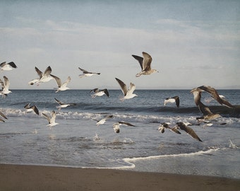 Coastal Photography, Nature Art Print, Seagull Artwork, Ocean Photograph, White and Blue Beach Photo, Denim Blue Home Decor, Landscape Art