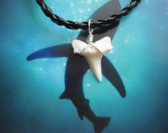 Shark Tooth Necklace, Modern day Mako Shark tooth, Braided leather cord, Silver plated wire wrap