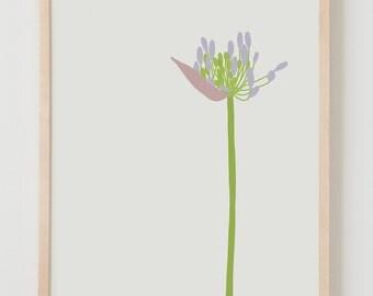 Fine Art Print. Agapanthus. June 24, 2015.