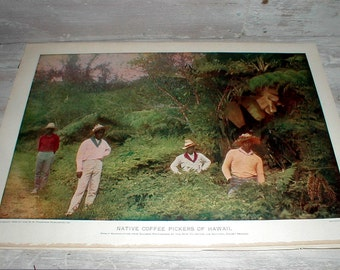 Antique Book Page *Native Coffee Pickers Of Hawaii* In Color *Hawaiian Art*