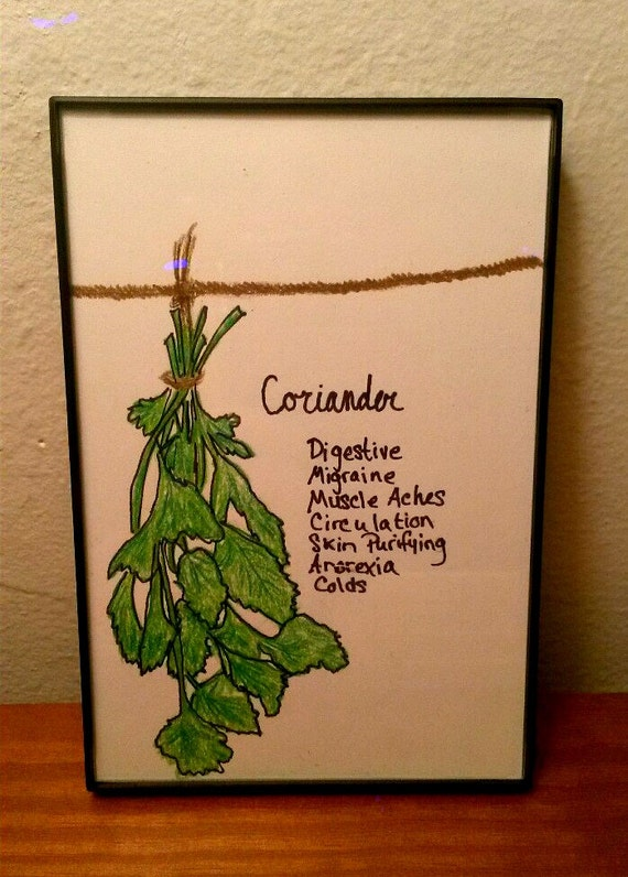 Hearttolifedesigns Framed Drawing Hanging Herbs Medicinal Uses