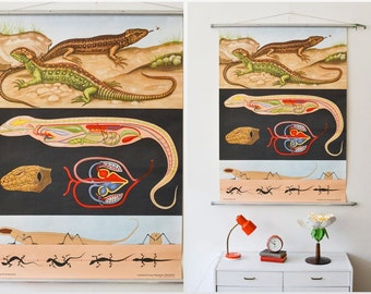 Vintage school pull down chart map lizard gecko zoology West German Jung Koch Quentell 78