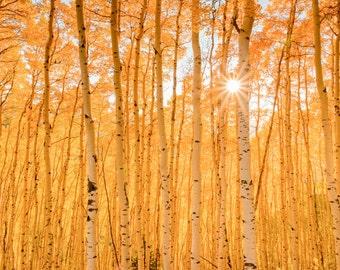 Colorado Landscape Photography Print - Rocky Mountain - Aspen Trees - Autumn Fall - MetalPrint Option - 11x14 16x20 20x30 24x36 30x40