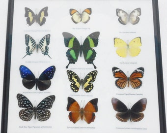 REAL 12 Mix Butterflies in frame for Sale Wall Decor Collectible Display Insect Taxidermy /B02M