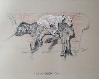 BULL TERRIER Irish Wolfhound Signed mounted 1920 circa Cecil Aldin dog plate print AGGLOMERATION Collectors rare item Christmas Thanksgiving