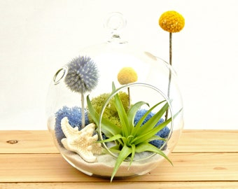 """Air Plant Terrarium Kit with Knobby Starfish, Moss, Blue Thistle, Yellow Billy Buttons / 5"""" Glass / Deep Blue Sea"""