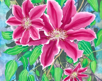 Botanical Flower Watercolour Pink Clematis - Limited Edition Giclee fine art print