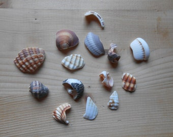 Shell fragments, craft supply, 14 pieces, jewelry supplies, surf tumbled shell fragments C16