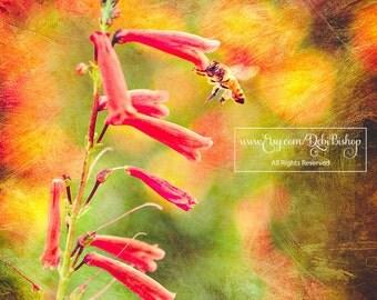 Honeybee Clinging To Red Penstemon Beardtongue Flower In Summer Flower Garden -Fine Art Photograph Textured -Home Decor Wall Art