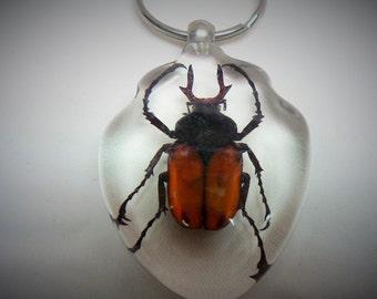 Beetle Bug Key Chain