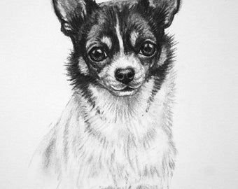Chihuahua dog art dog print dog gift dog lover gift toy dog fine art LE print from an original charcoal drawing by H Irvine