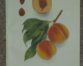 Vintage early 20th century Lithograph FOSTER PEACHES book illustration